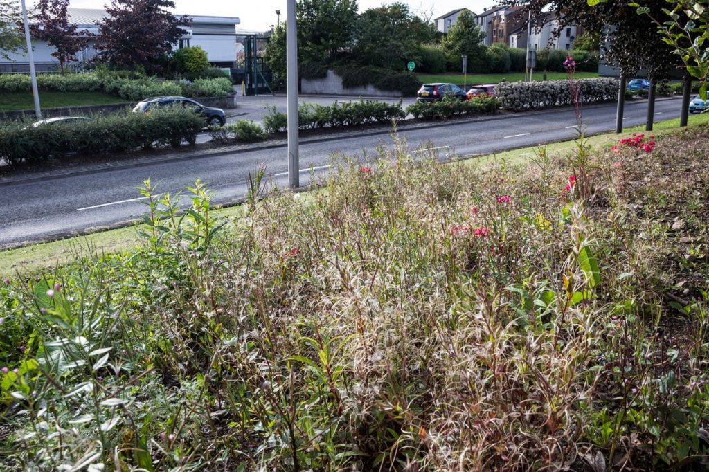 Photo of flowerbed at South Anderson Drive