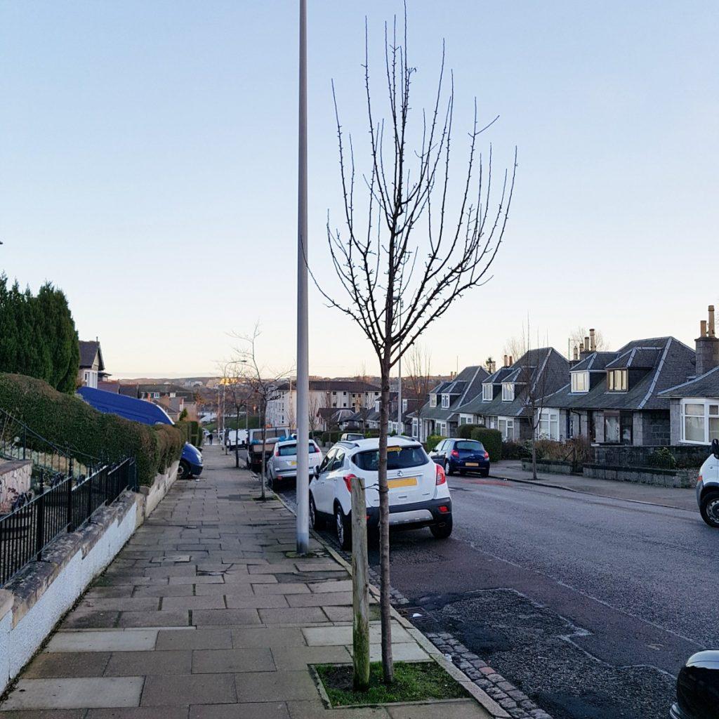 Photo of south Gray Street trees