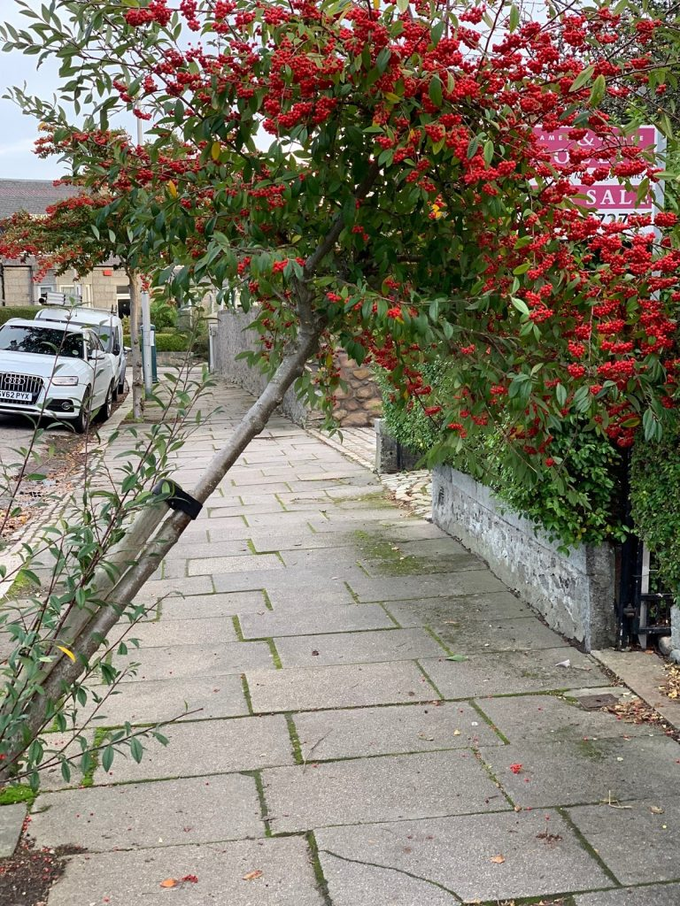 Photo of tree leaning over pavement