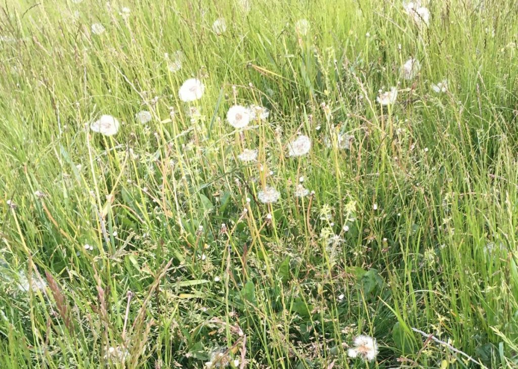Photo of long grass with weeds