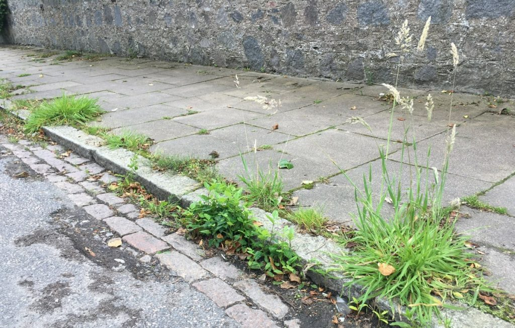 Photo of weeds in pavement and gutter